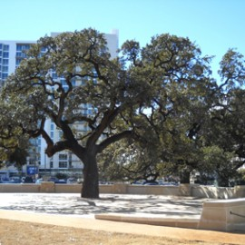 Building in a Green City – Protected Trees